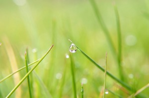 water_drop_on_grass_203309